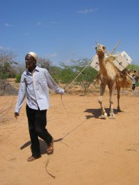 camel-books